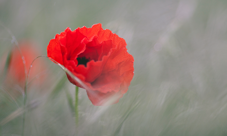 5 Remembrance Day Resources for the Classroom