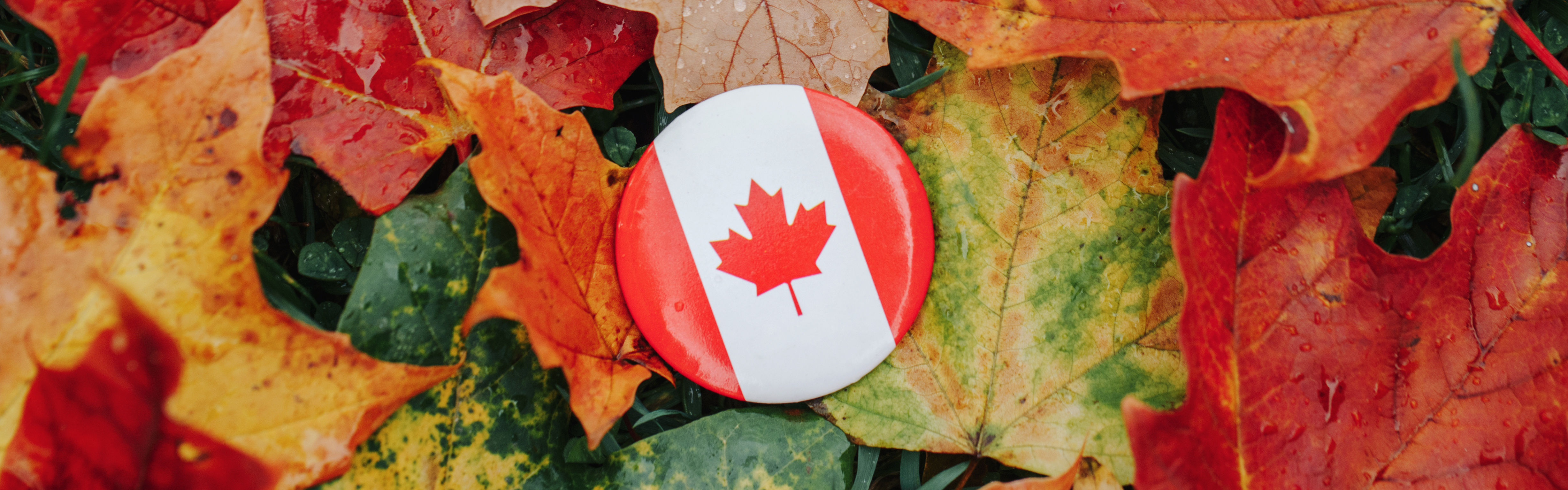 Canadian Thanksgiving 101 [Classroom Resources] featured image